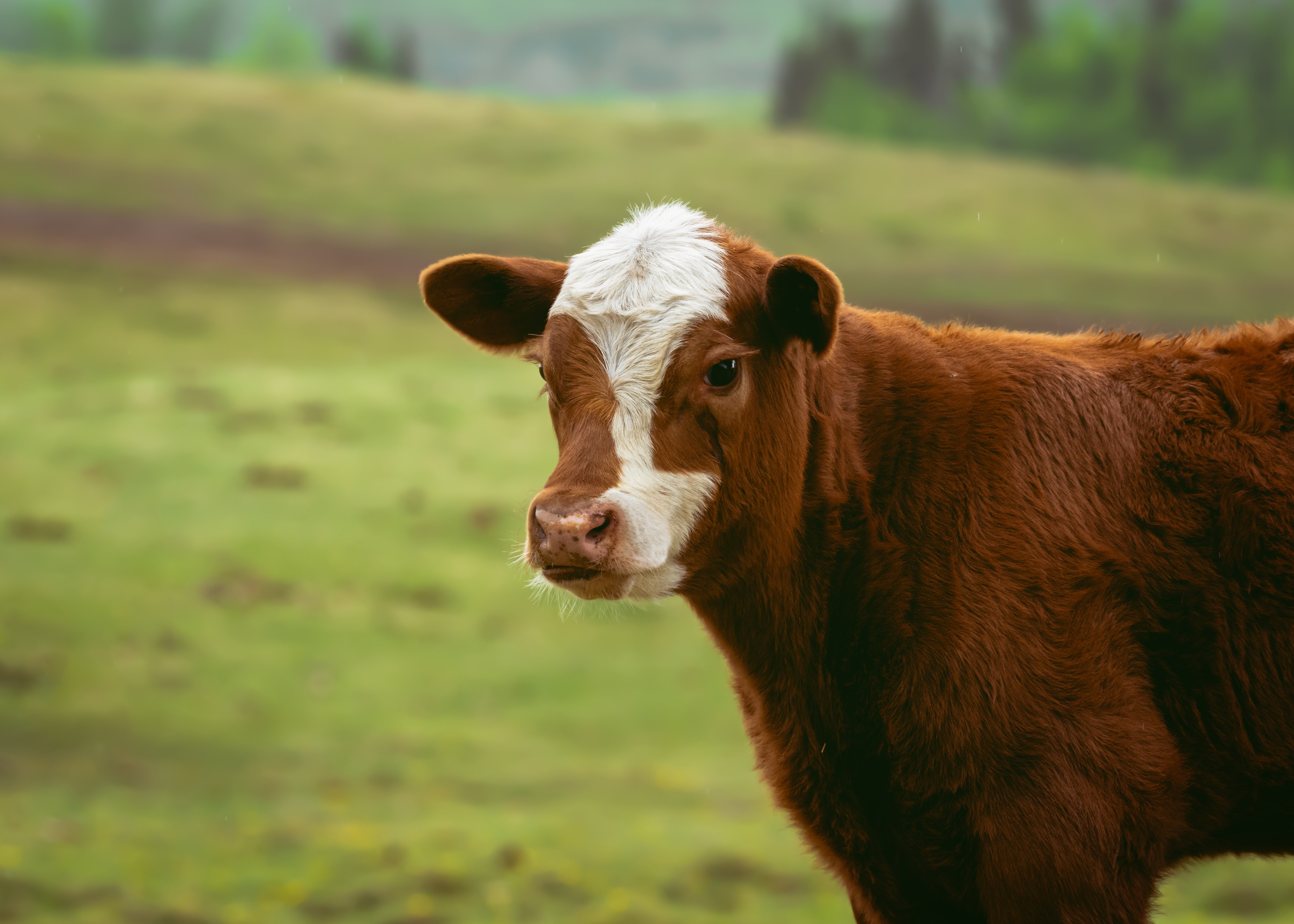 nutraceutical companies baby cow